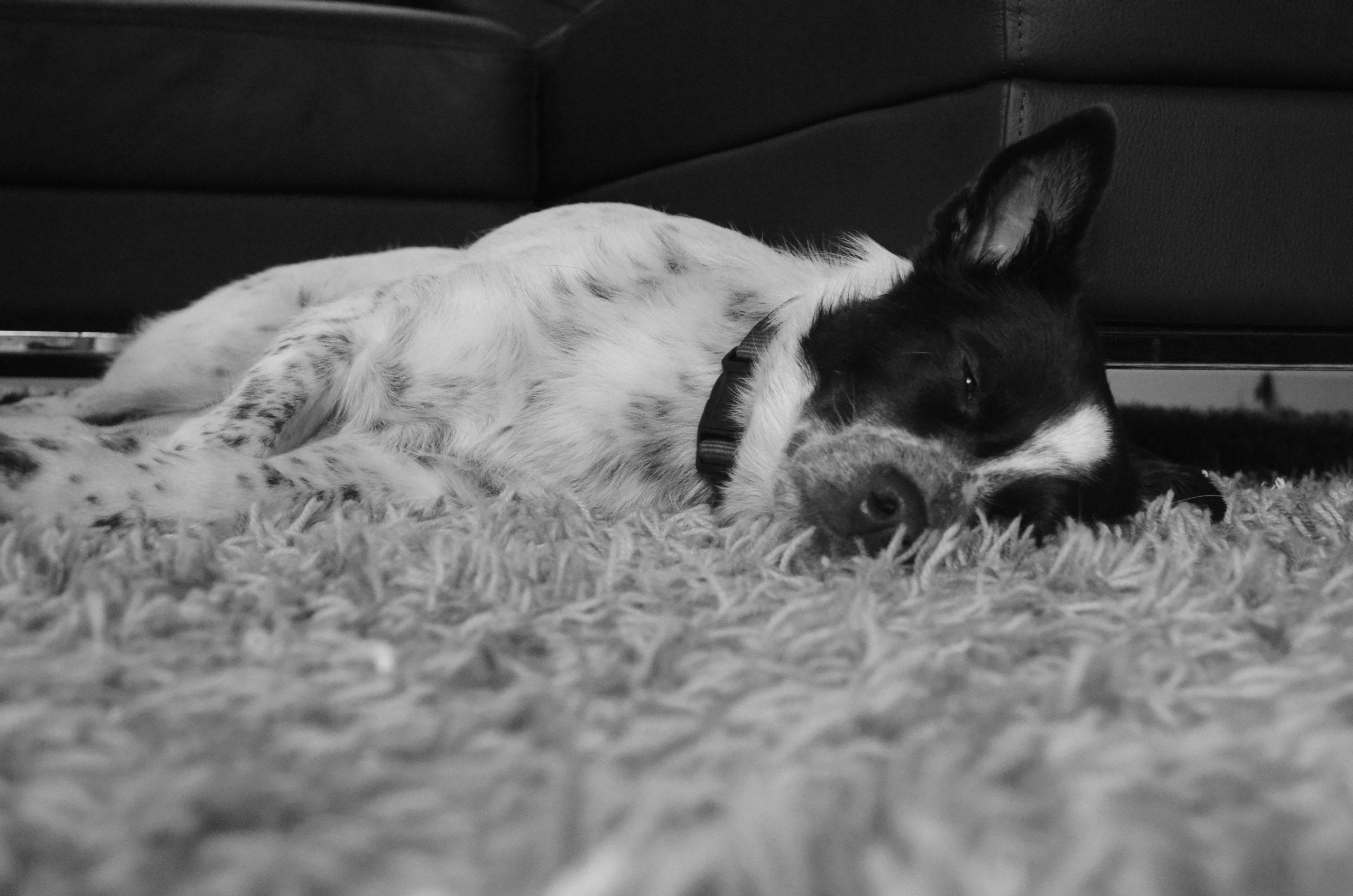 Gewalt in der Hundeerziehung – so findest du Wege raus aus deinen Verhaltensmustern