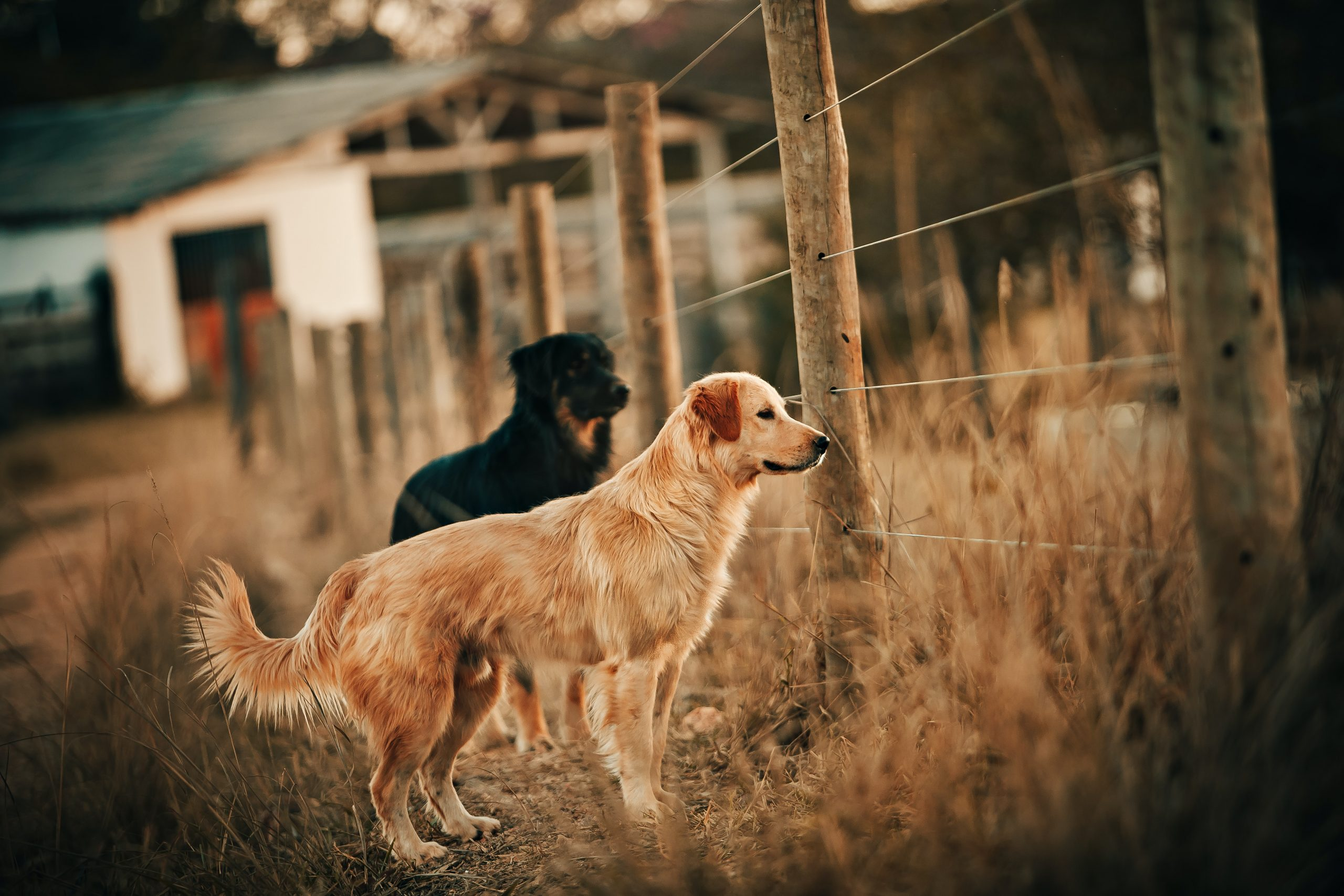 Mindset in Hundebegegnungen